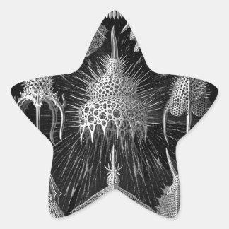 Cáscaras del plancton en blanco y negro pegatina en forma de estrella