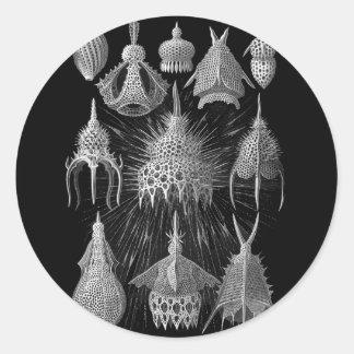 Cáscaras del plancton en blanco y negro etiqueta redonda