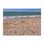 Cáscaras en la playa - Sanibel Captiva Lienzo Envuelto Para Galerias