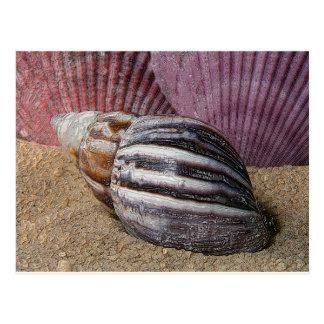 Cáscaras en la postal de la arena