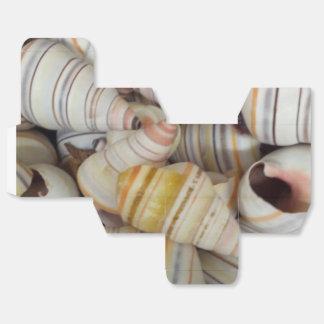 Cáscaras haitianas del caracol del árbol cajas para regalos