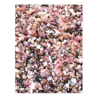 Cáscaras minúsculas del mar postal