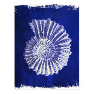 cáscaras rústicas del mar del vintage del azul de tarjeta postal