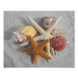 Cáscaras y estrellas de mar mezcladas del mar en l impresiones fotográficas