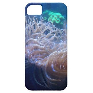Case iPhone 5 Case