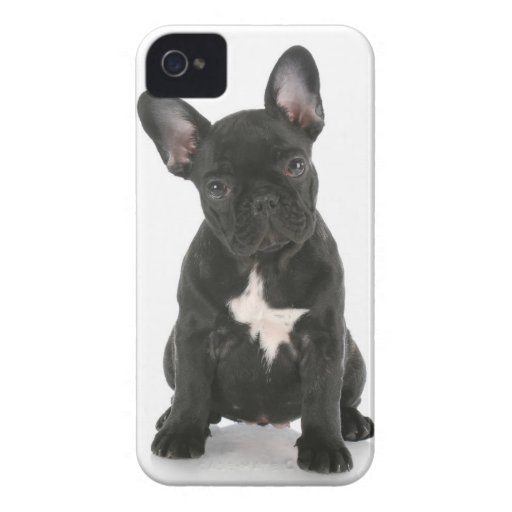 "Case iPHONE 4/4S ""PET"" iPhone 4 Case-Mate Coberturas"