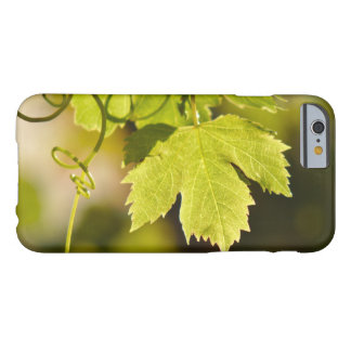 Case: Mediterranean Grape Vine Barely There iPhone 6 Case