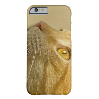 Case with a red cat.