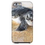 casebaby-tortuga del iPhone 6. caseiPhone 6 del