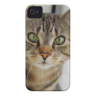 Casemate curious cat iPhone 4 Case-Mate case