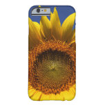 caseSunflowercase iPhone 6 Case