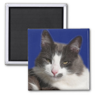 Casey White Grey Cat Refrigerator Magnet