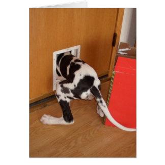 Cash Trapped Harleguin Great Dane Puppy card