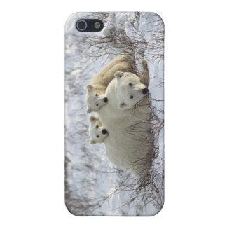 Caso #10 del iPhone del oso polar iPhone 5 Protectores