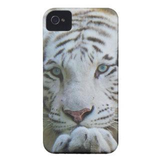 Caso 4S del iphone del tigre iPhone 4 Case-Mate Protectores