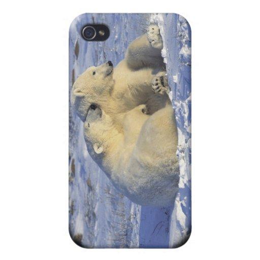 Caso #5 del iPhone del oso polar iPhone 4/4S Carcasa