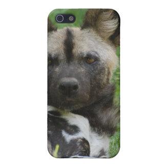 Caso africano del iPhone 4 del perro salvaje iPhone 5 Coberturas