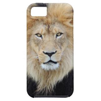 Caso africano del iPhone 5 del león iPhone 5 Case-Mate Coberturas