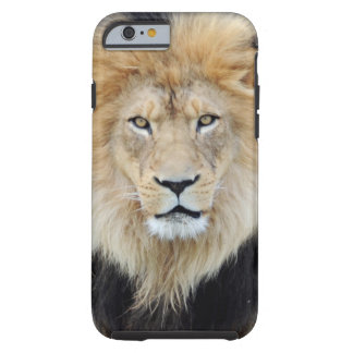 Caso africano del iPhone 6 del león Funda De iPhone 6 Tough