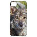 Caso Alsatian del perro casero del pastor alemán iPhone 5 Cárcasa