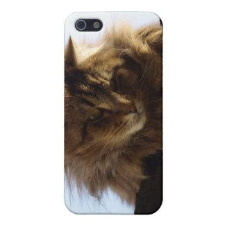 Caso animal de pelo largo del iPhone del gato de iPhone 5 Carcasas