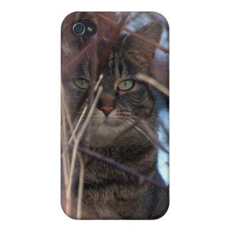 Caso animal salvaje del iPhone del gato de Tabby iPhone 4 Carcasas