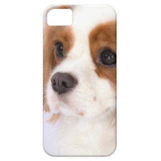 Caso arrogante dulce del iphone 5g del perro de ag iPhone 5 Case-Mate protectores