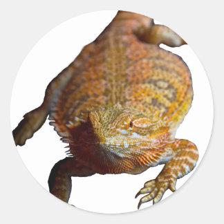 Caso barbudo del iPhone 5 del dragón Pegatina Redonda