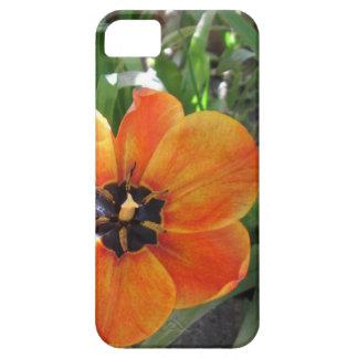 Caso brillante de la macro iPhone5 del tulipán iPhone 5 Case-Mate Carcasa
