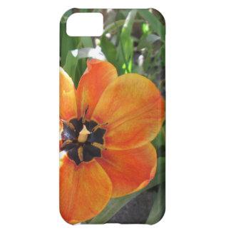 Caso brillante de la macro iPhone5 del tulipán