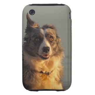 Caso corriente del iPhone 3G/3GS del perro del Tough iPhone 3 Carcasa