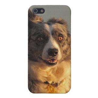 Caso corriente del iPhone 4 del perro del border c iPhone 5 Protectores