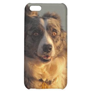 Caso corriente del iPhone 4 del perro del border c