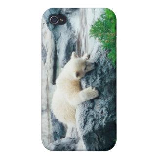 Caso curioso del iPhone de Cub del oso polar iPhone 4 Coberturas