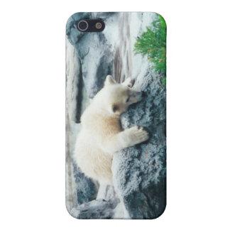 Caso curioso del iPhone de Cub del oso polar iPhone 5 Fundas