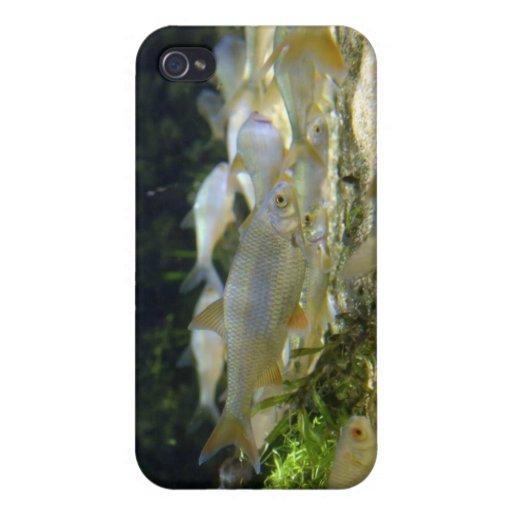 Caso de agua dulce del iPhone de los pescados de p iPhone 4 Cobertura