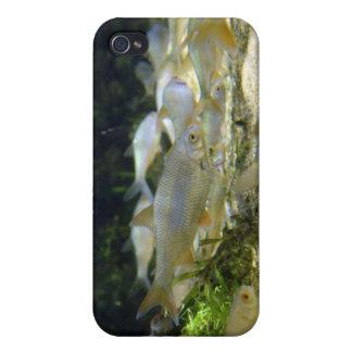 Caso de agua dulce del iPhone de los pescados de p iPhone 4/4S Carcasas