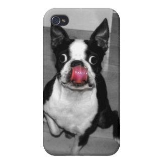 Caso de Boston Terrier Iphone iPhone 4 Protectores