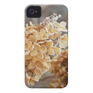 Caso de Frost IPhone 4 de la planta del invierno Case-Mate iPhone 4 Coberturas