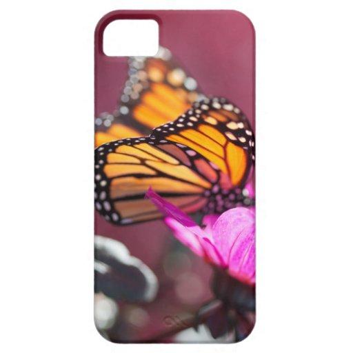 Caso de IiPhone 5 de la mariposa de monarca iPhone 5 Case-Mate Carcasa