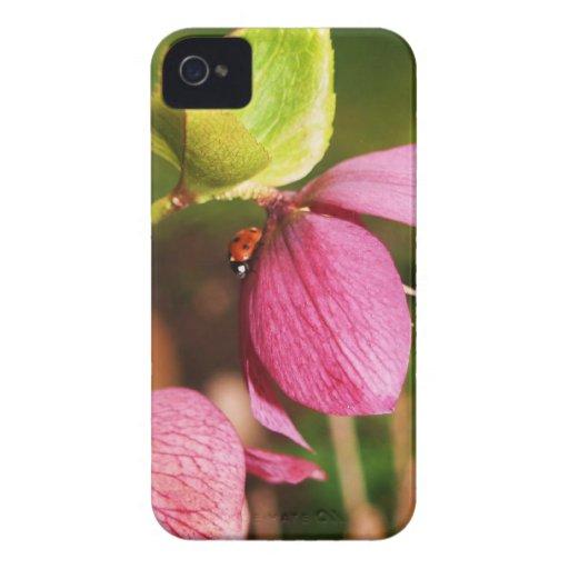 Caso de Iphone 4 de la flor del rosa de navidad iPhone 4 Protector