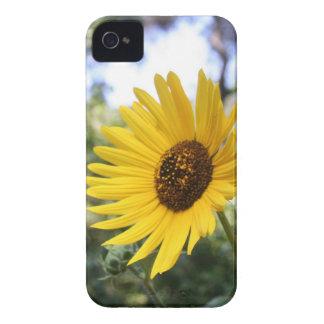 Caso de IPhone 4 de la margarita iPhone 4 Fundas