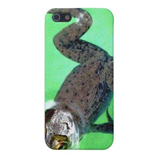 Caso de IPhone 4 de la rana de Swimmin iPhone 5 Carcasa