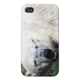 Caso de IPhone 4 del oso polar iPhone 4 Cárcasas