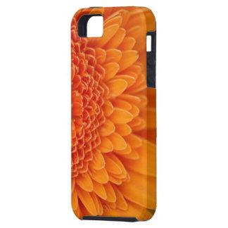 Caso de Iphone 5 de la casamata del pétalo de la f iPhone 5 Cárcasa