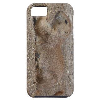 Caso de IPhone del perro de las praderas iPhone 5 Fundas