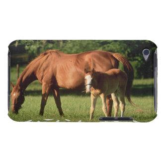 Caso de iTouch de la familia del caballo iPod Touch Case-Mate Carcasa