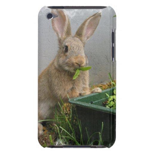 Caso de iTouch del conejo de conejo de rabo blanco iPod Touch Carcasas