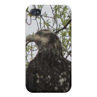 Caso de Kenai Alaska Eagle de oro IPhone4 iPhone 4/4S Carcasa