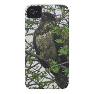 Caso de Kenai Alaska Eagle de oro Iphone Case-Mate iPhone 4 Cárcasas